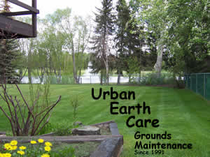 One of Urban Earth Care's clients yards, customer since 1992